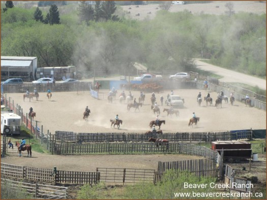 SRCHA Cowhorse Show at Beaver Creek Ranch SK