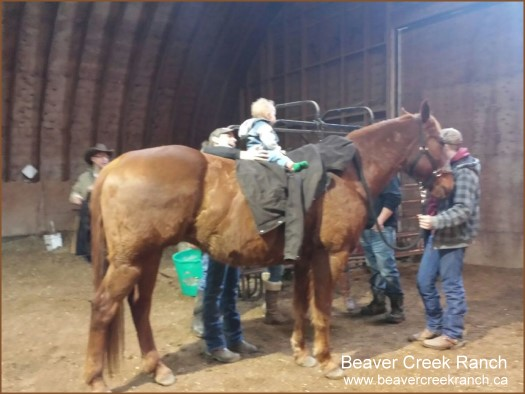Beaver Creek Ranch - Team Penning - Lumsden, SK