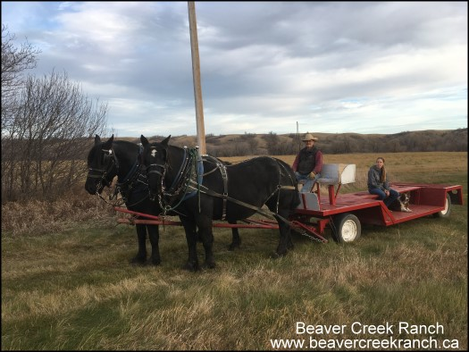 Beaver Creek Ranch - Lumsden, SK
