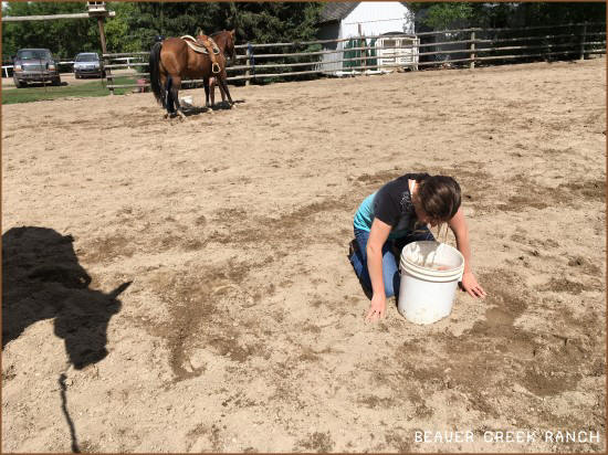 Horseback riding camps at Beaver Creek Ranch - Lumsden, SK